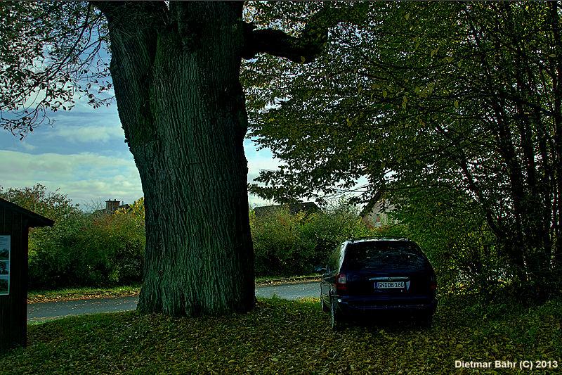 SDW Schutzgemeinschaft Deutscher Wald Schlu00fcchtern